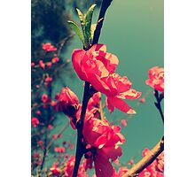 Lomo Blossoms  Photographic Print