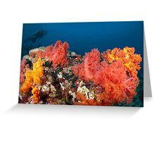Soft coral garden Greeting Card