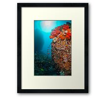 Reef scene with soft coral Framed Print