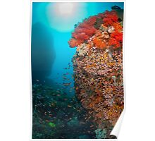 Reef scene with soft coral Poster