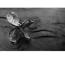 Butterfly Seed Photographic Print