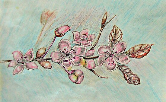 cherry blossom flowers by thuraya arts