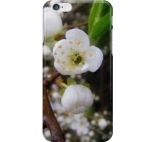 May Blossom iPhone/iPod Case iPhone Case/Skin