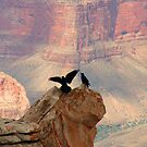 Grand Canyon Ravens by Daniel Owens