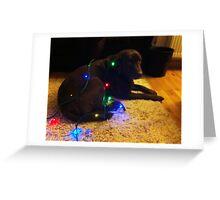 Christmas Canine Greeting Card