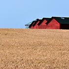 A field of barns by Jean Poulton