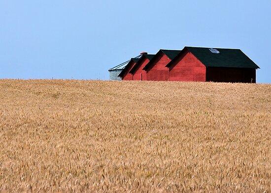 A field of barns by Jean Poulton