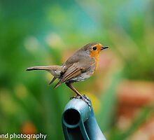 the gardens favourite guest by Steve Shand