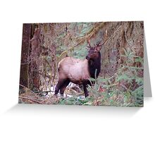 Buck in the Hoh Rainforest Greeting Card