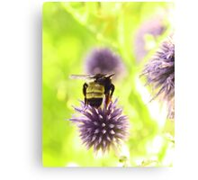 Bumble and Thistle Canvas Print