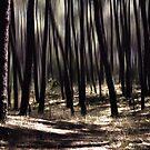 autumn rays by Ingz