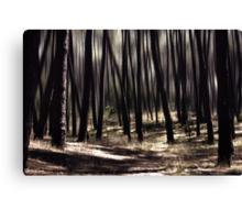 autumn rays Canvas Print