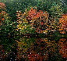 Rhode Island Foliage by Nancy de Flon
