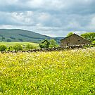 Summer meadow and barn by Sue Knowles