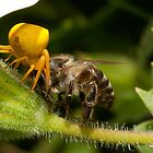 Bee battle by AntonAlberts