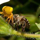 Bee battle by Anton Alberts