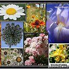 tzuka_planche_flowers by tzukakurma