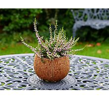 Winter heather in a coconut shell planter Photographic Print