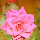 Flower by anguishdesigns