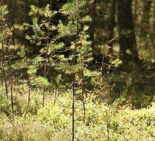 pine needles by mrivserg