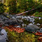 The Beauty Of Colors by Charles & Patricia   Harkins ~ Picture Oregon