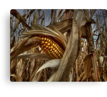 Thats A Bunch Of Corn! Canvas Print
