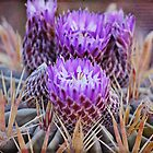 Purple Cactus by photecstasy