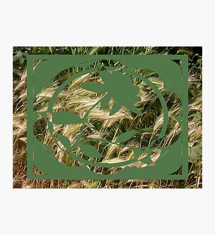 wild oats Photographic Print