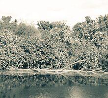 Along a shore line - Garlo Heritage Nature Preserve  by Mitch Labuda