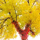 Red and Yellow by lorilee
