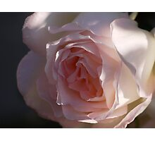 One rose is one world  Photographic Print
