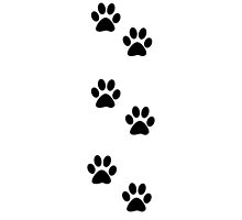Dog Paws, Traces, Paw-prints - White Black by sitnica
