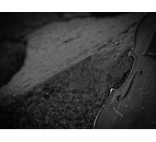 Music Nature: Violin 3 Photographic Print
