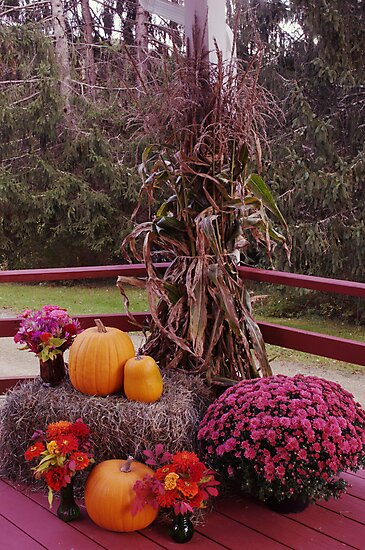 beautiful fall colors by Penny Rinker