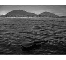 Music Nature: Violin 9 Photographic Print