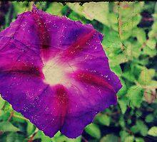 Purple Morning Glory by Konoko479
