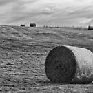 Hay Bales by Vicki Field