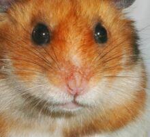 Syrian Hamster Barney Sticker