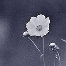 Flowered Morning by budrfli