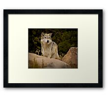 The Look Of A Hunter Framed Print