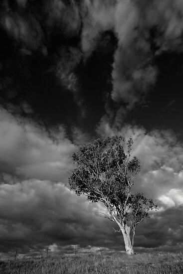 Natures Drama by David Haviland