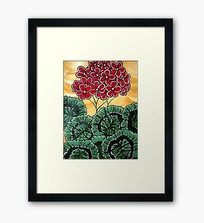 Geranium Framed Print