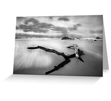 Log Reflections Greeting Card