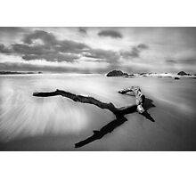 Log Reflections Photographic Print