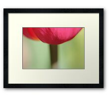 Tulip Stem Framed Print
