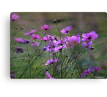 Autumn Colours - Purple Windflowers Canvas Print