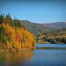 Polish Golden Autumn by Redrose10
