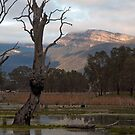 Giblings in the Grampians by Janette Rodgers