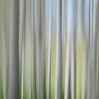 Abstract Birch by gmws