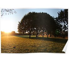 Sunrise Trees Poster